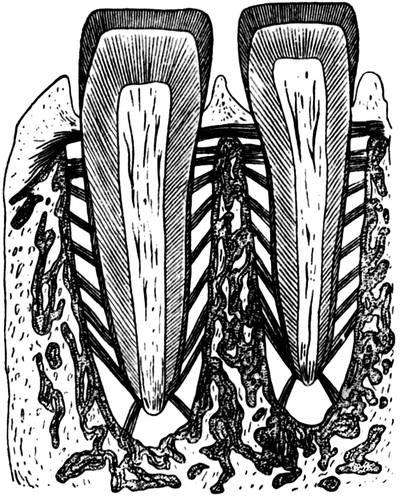 Схема расположения пучков